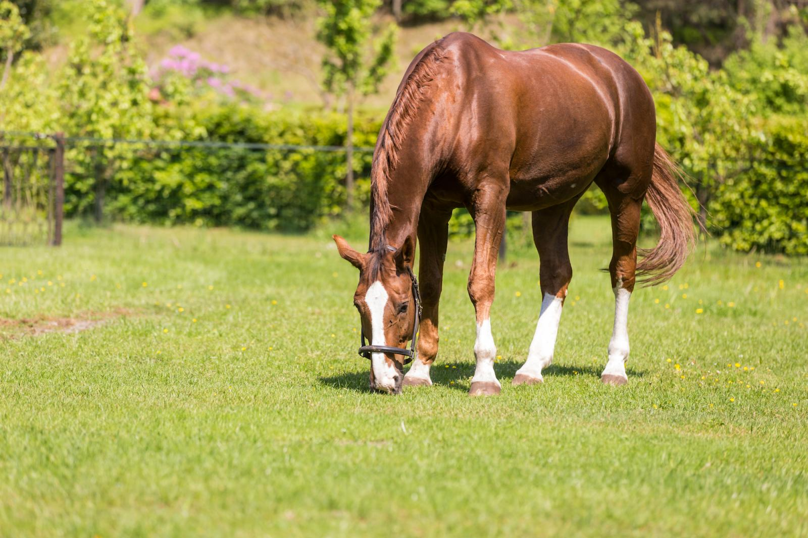 Hotel Estate Het Roode Koper - Horse and Rider package